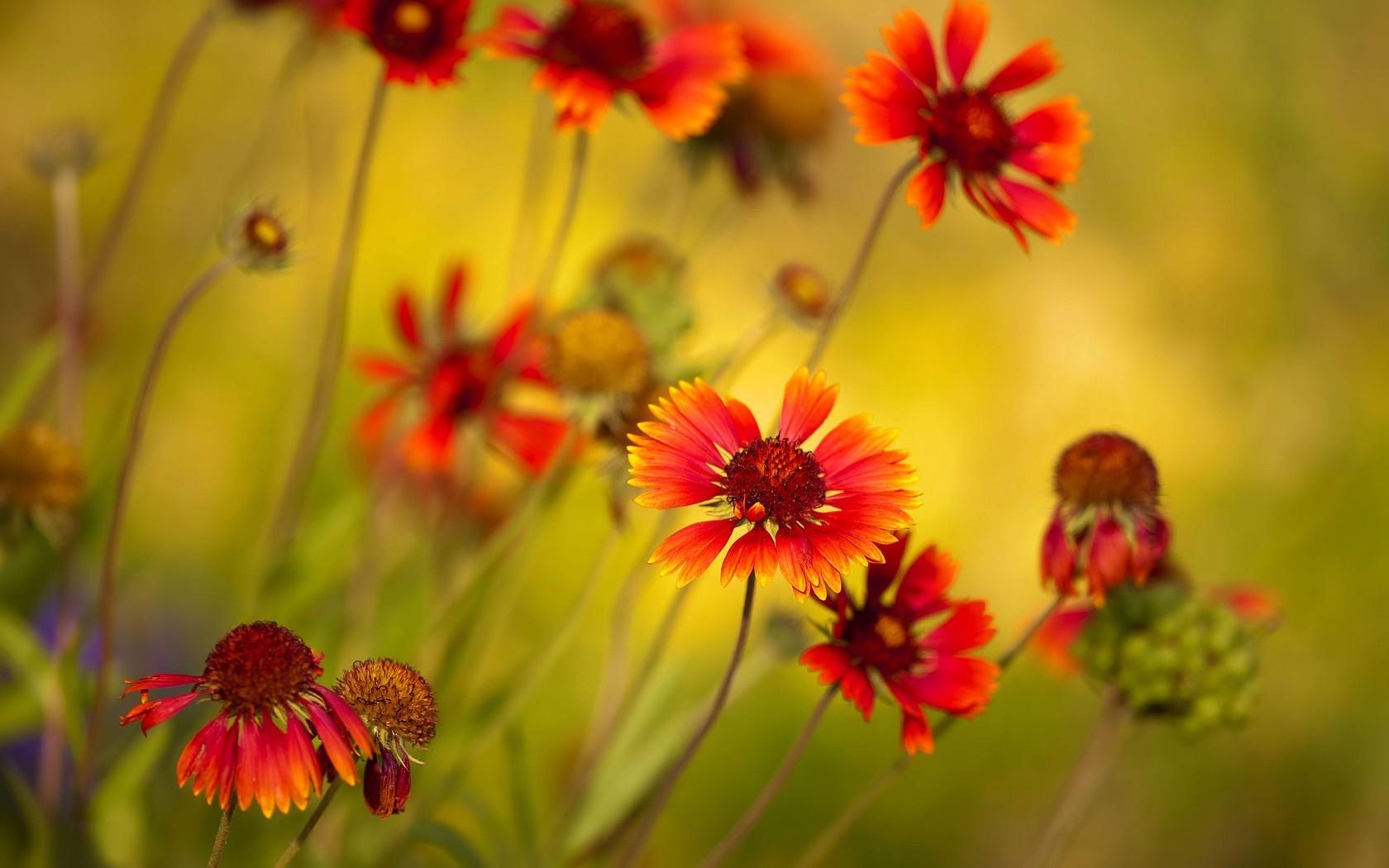 Flores y enfoques - 1680x1050