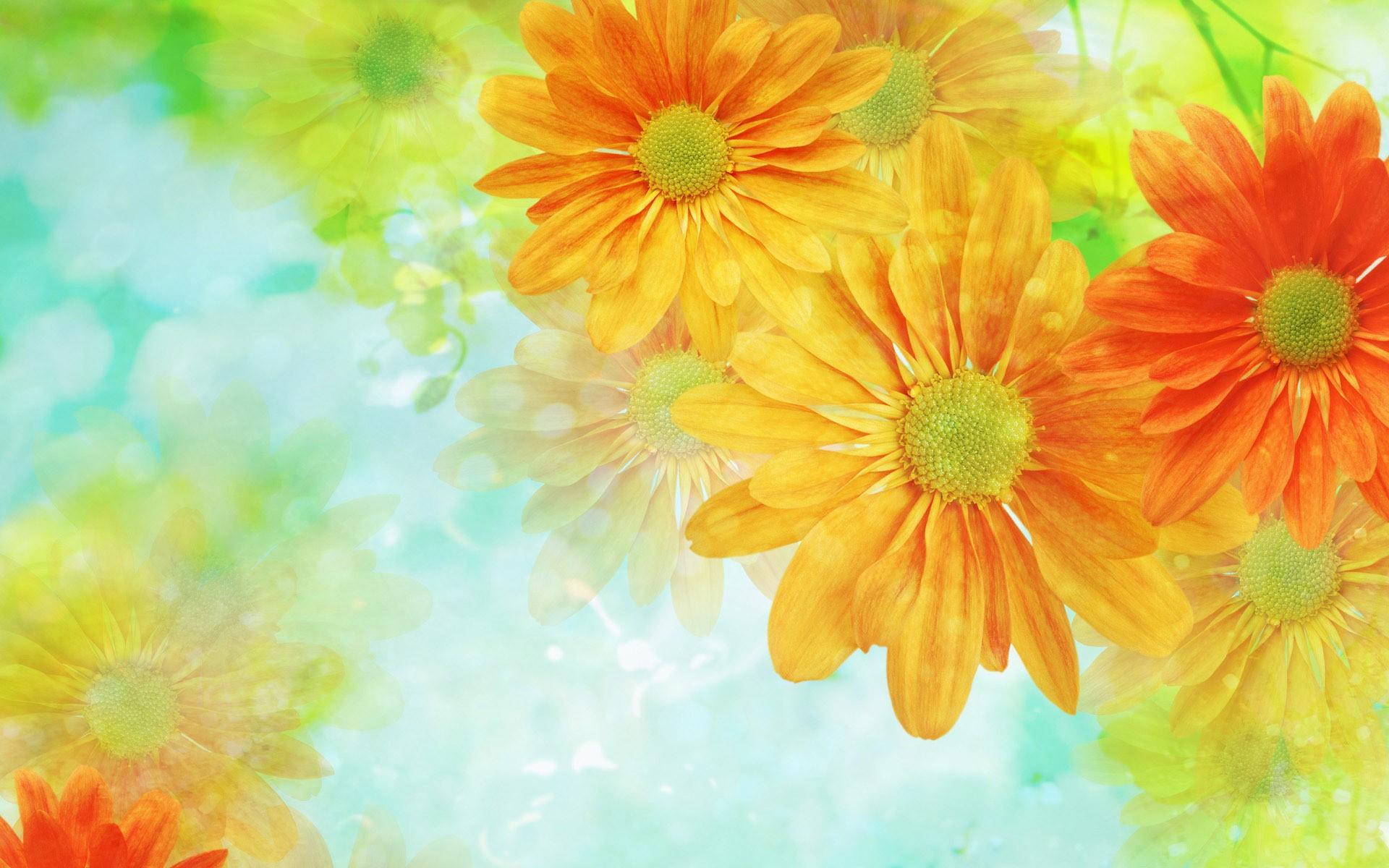 Fondo con hermosas flores - 1920x1200
