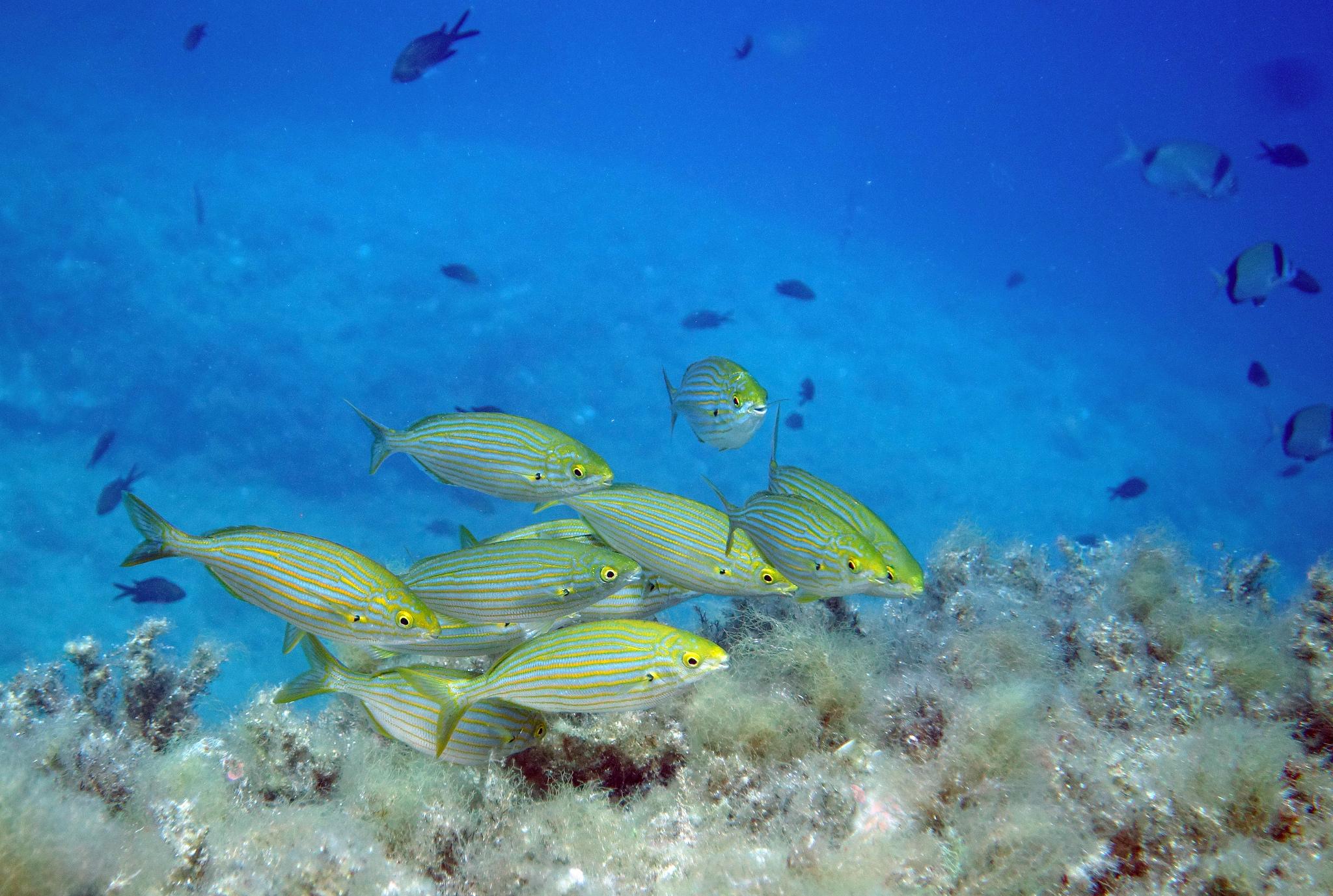 Fondos marinos con peces - 2048x1377
