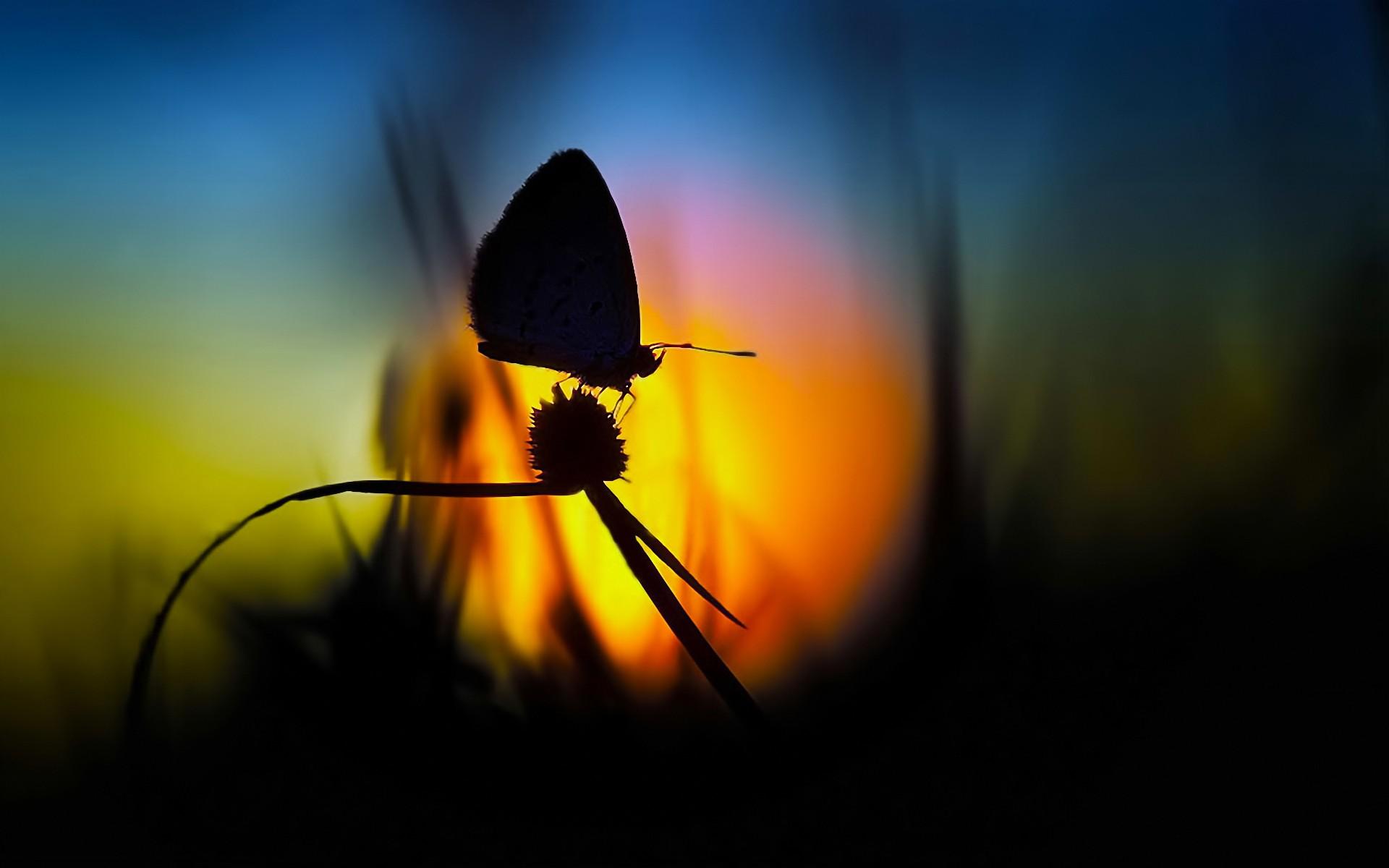 Foto de mariposa en contraluz - 1920x1200