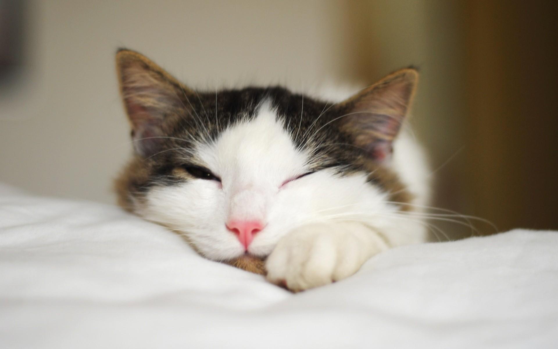 Fotografia de gatos - 1920x1200