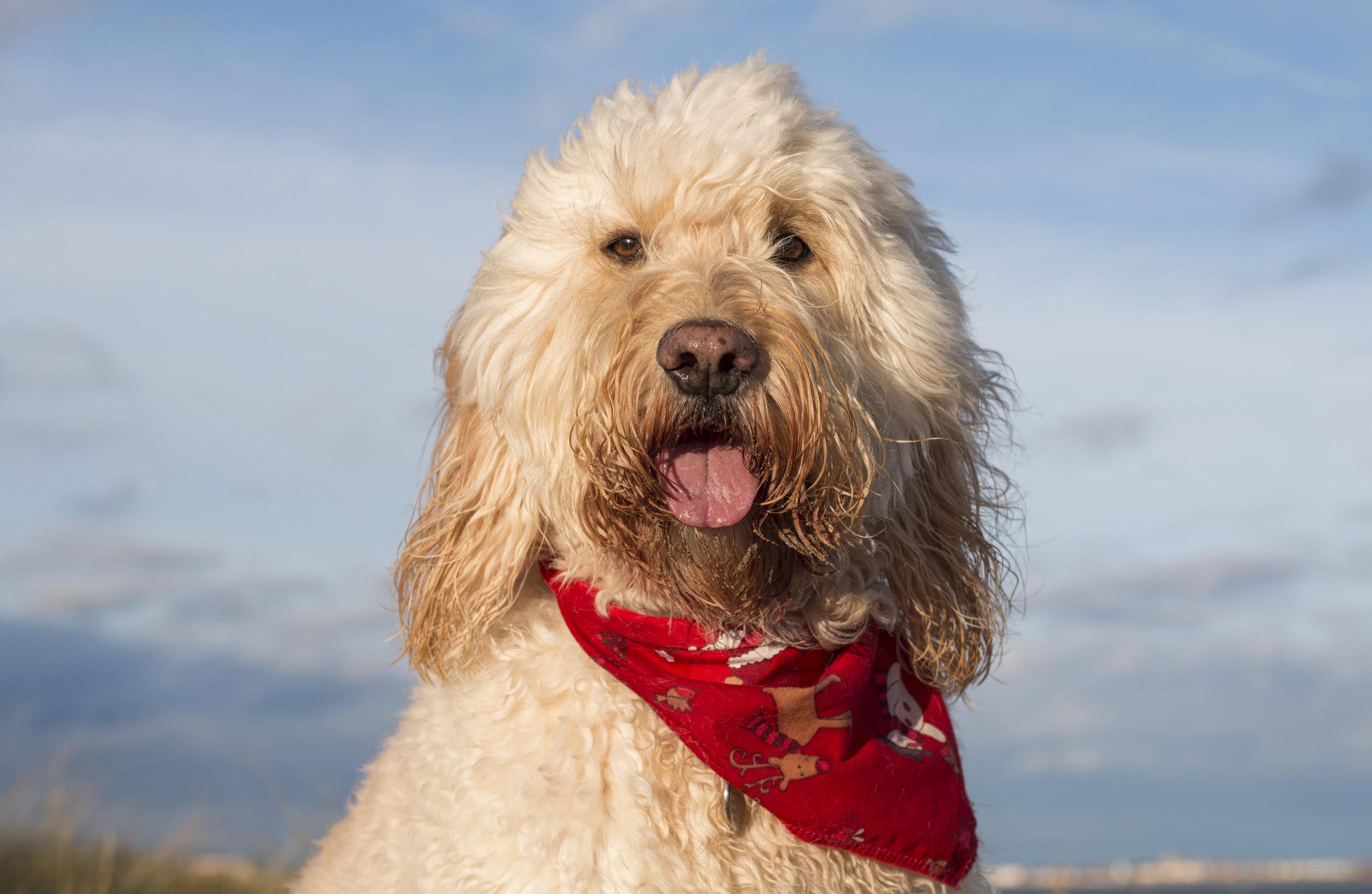 Fotografías de perros - 2048x1335