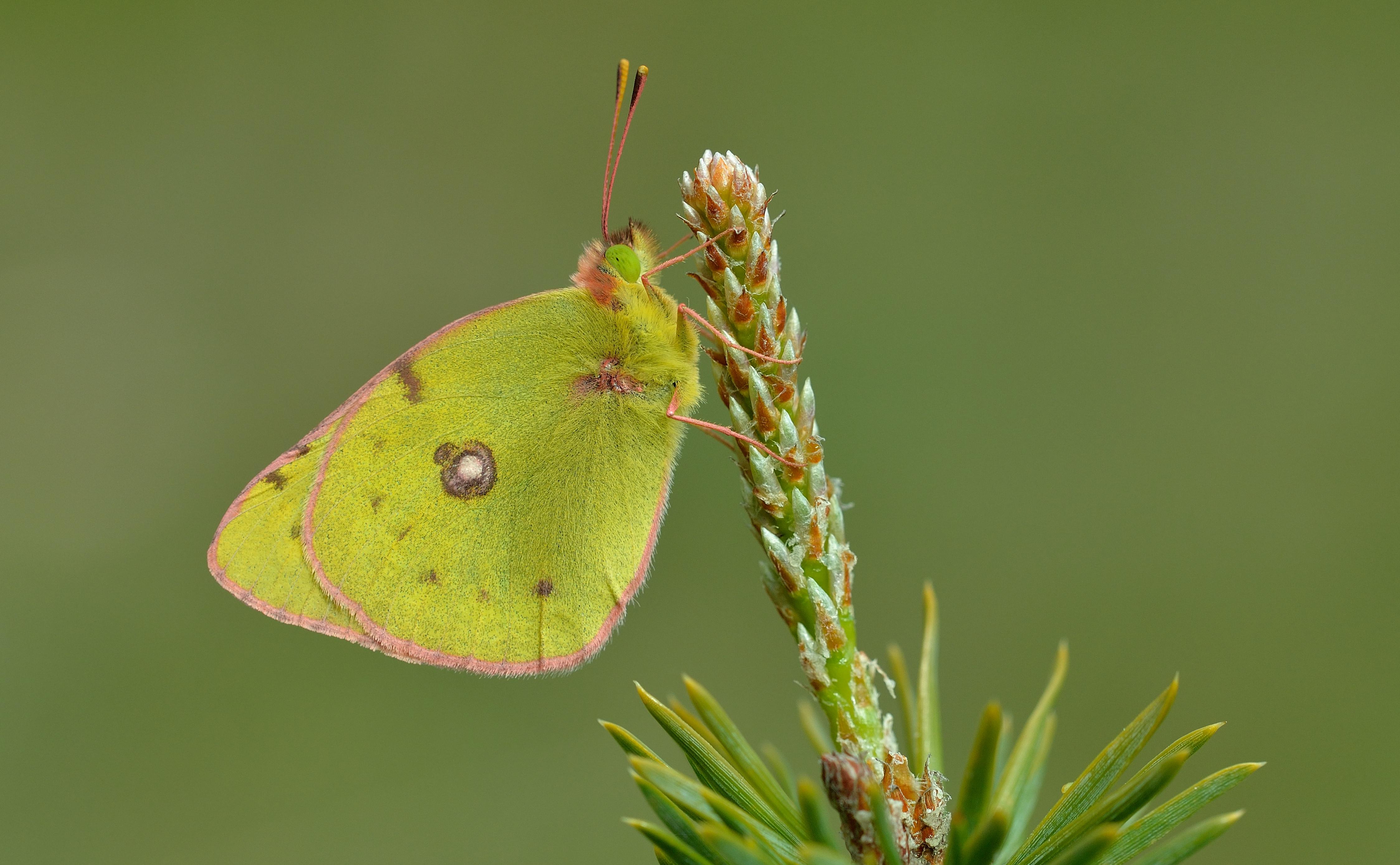 Fotografías macro de mariposas - 4495x2777