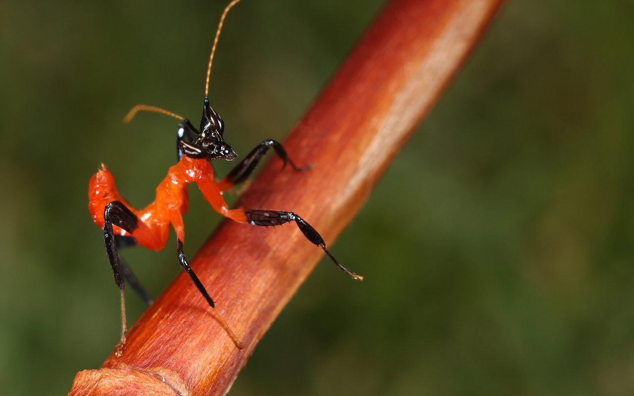 Fotos insectos macro - 1280x800