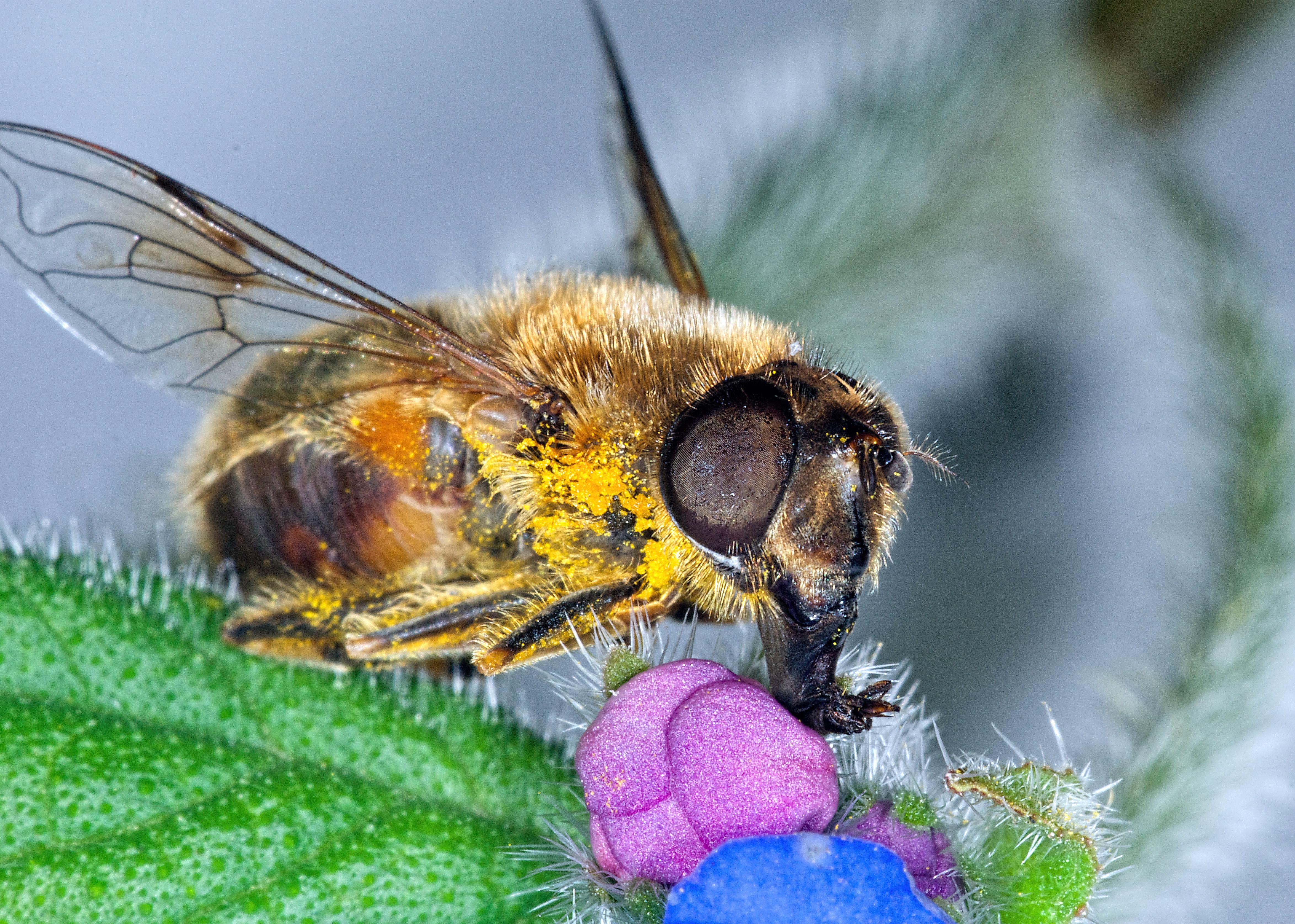 Fotos macro de abejas - 4695x3352