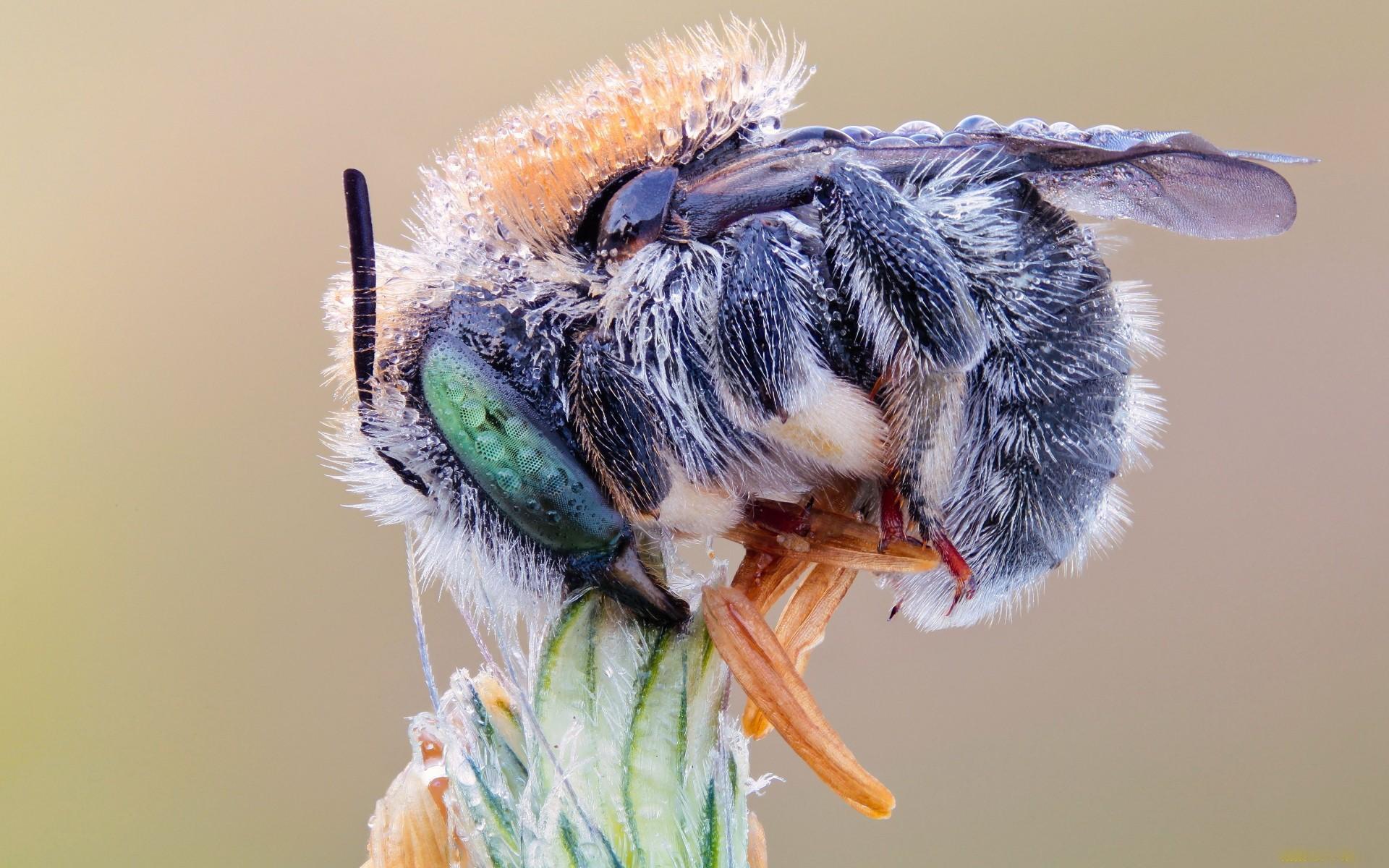 Fotos macro de insectos - 1920x1200