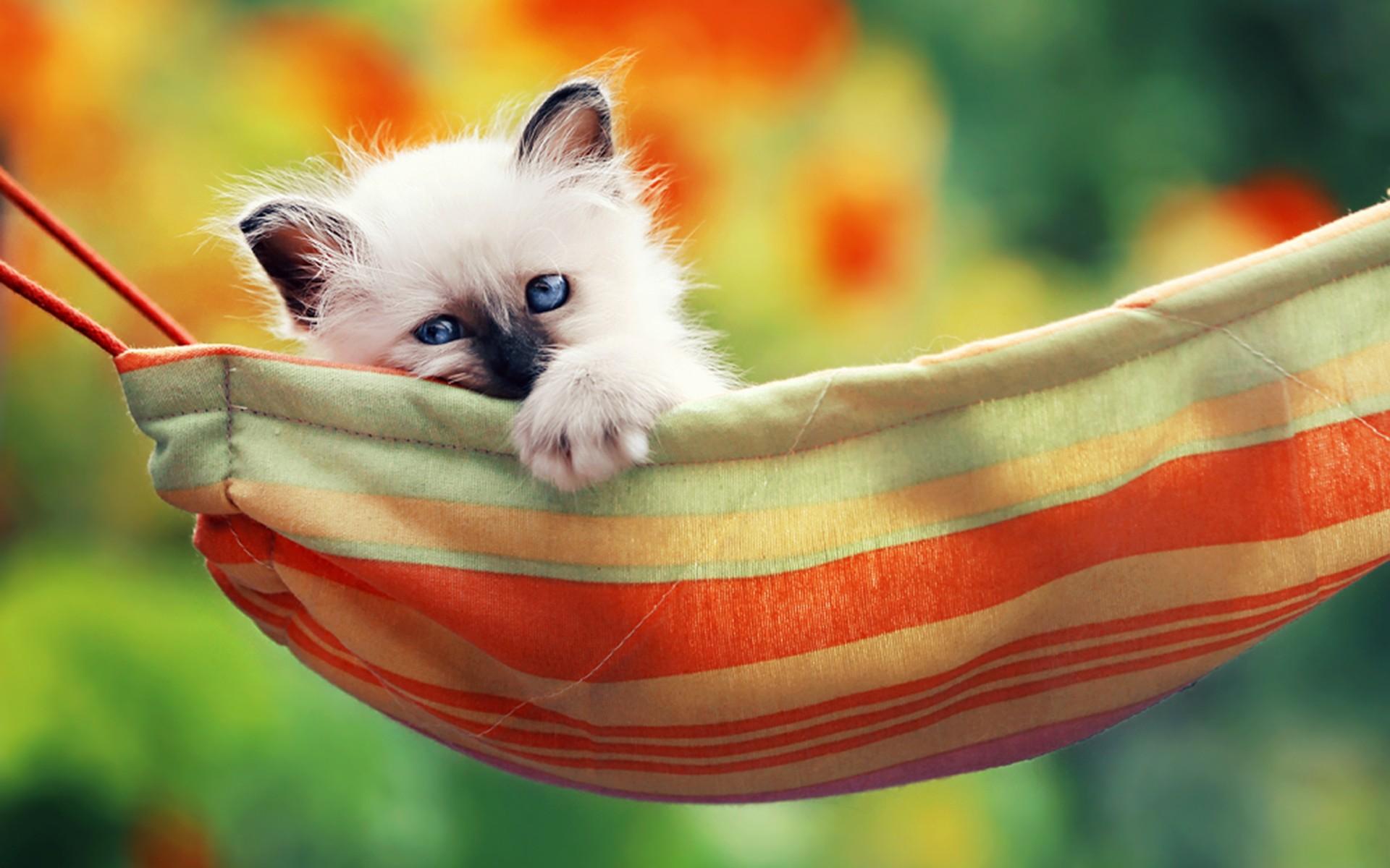 Gatos HD (imágenes, wallpapers) +10 si te llevas uno