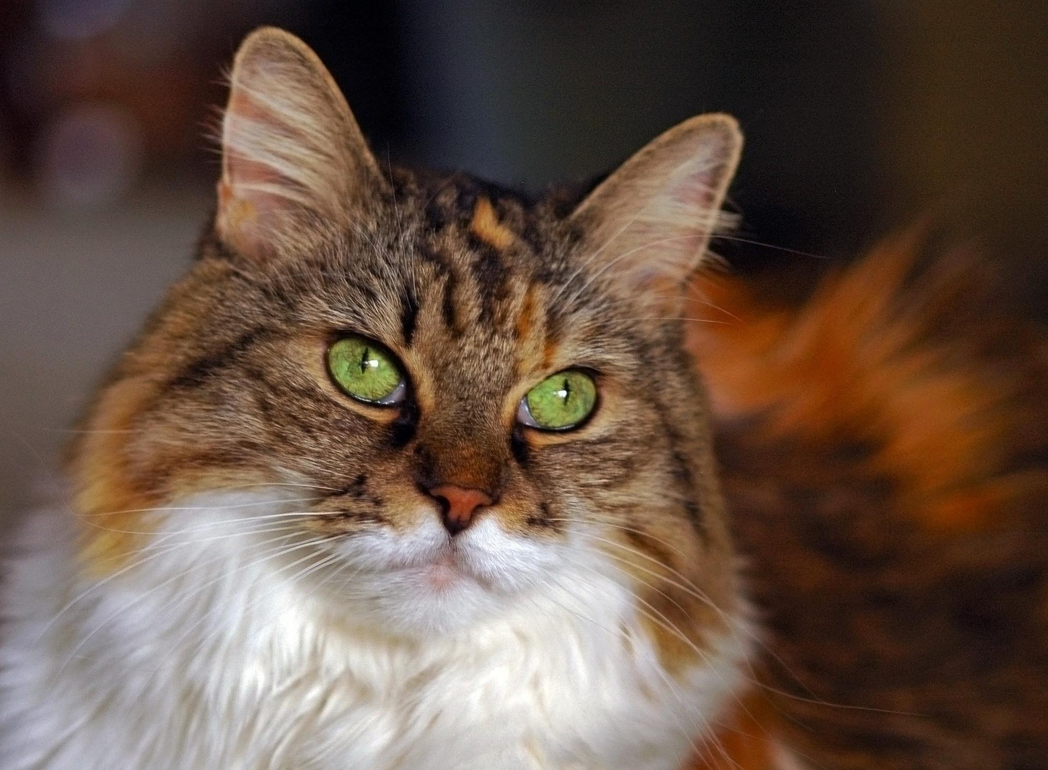 Gato ojos verdes - 2048x1505