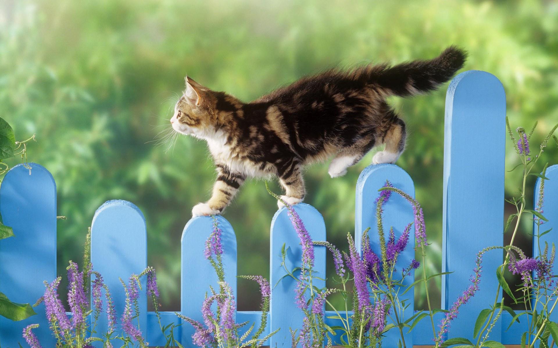 Gato paseando por unas rejas - 1920x1200