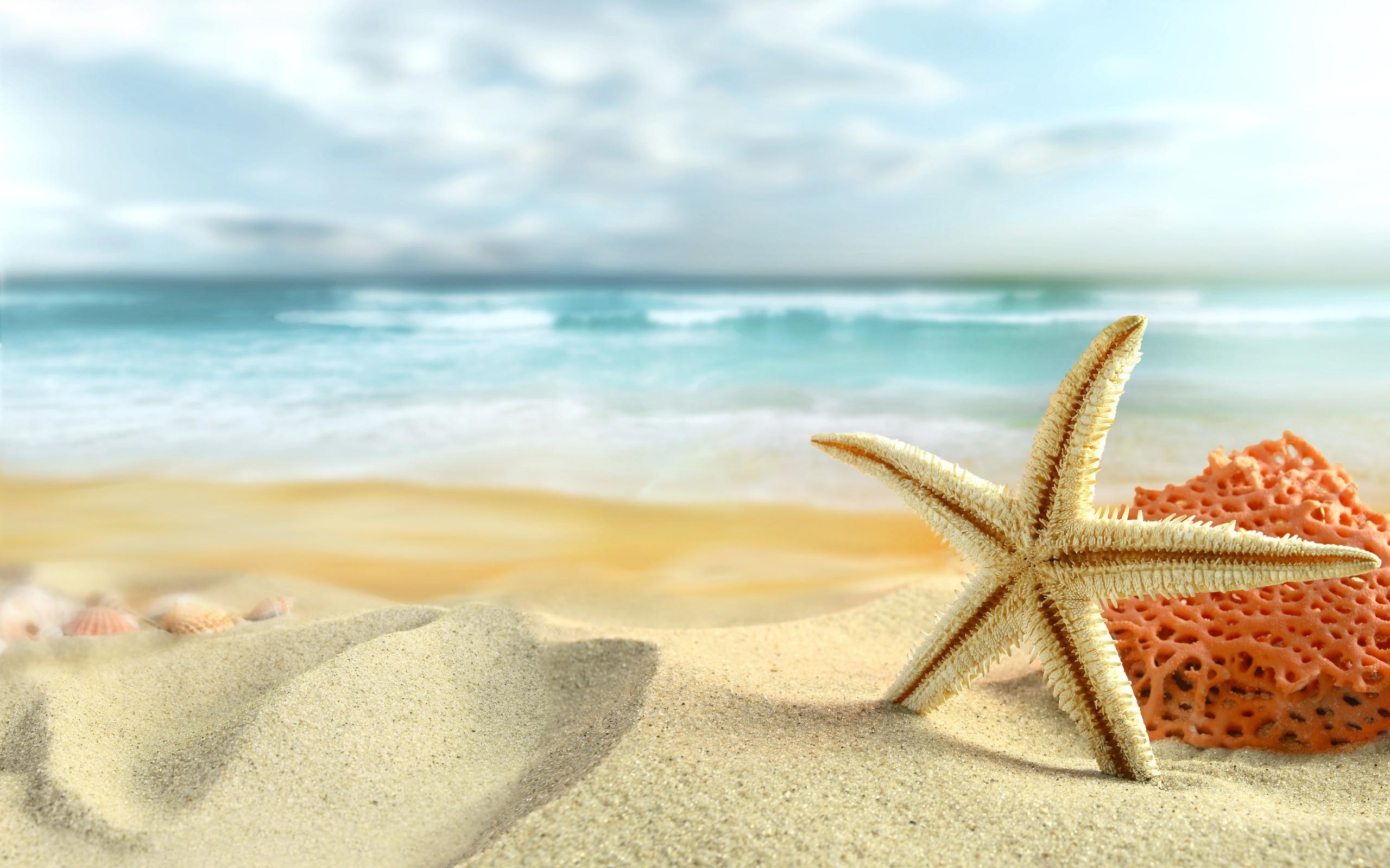 Hermosa estrella de mar - 2560x1600