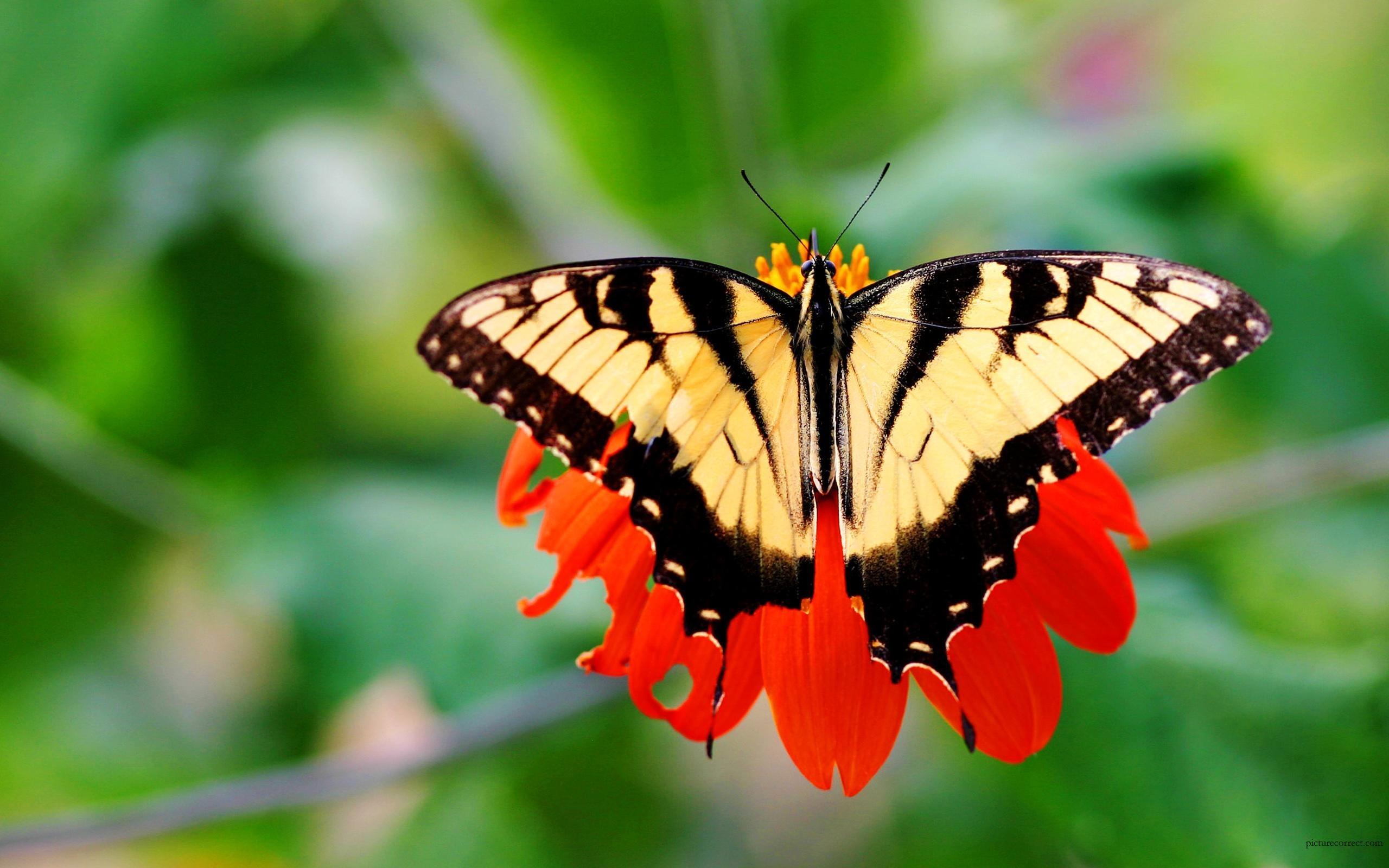 Hermosa mariposa amarilla - 2560x1600
