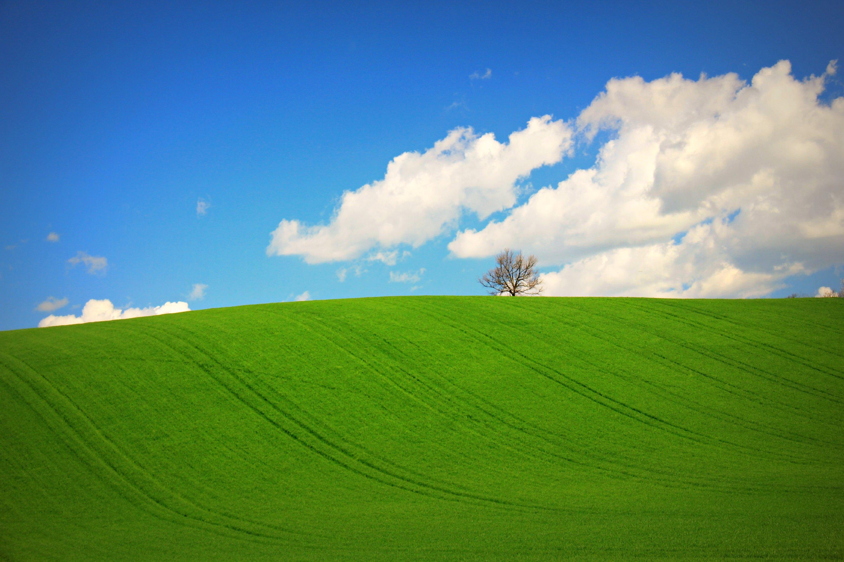 Hermosa pradera verde - 3318x2212