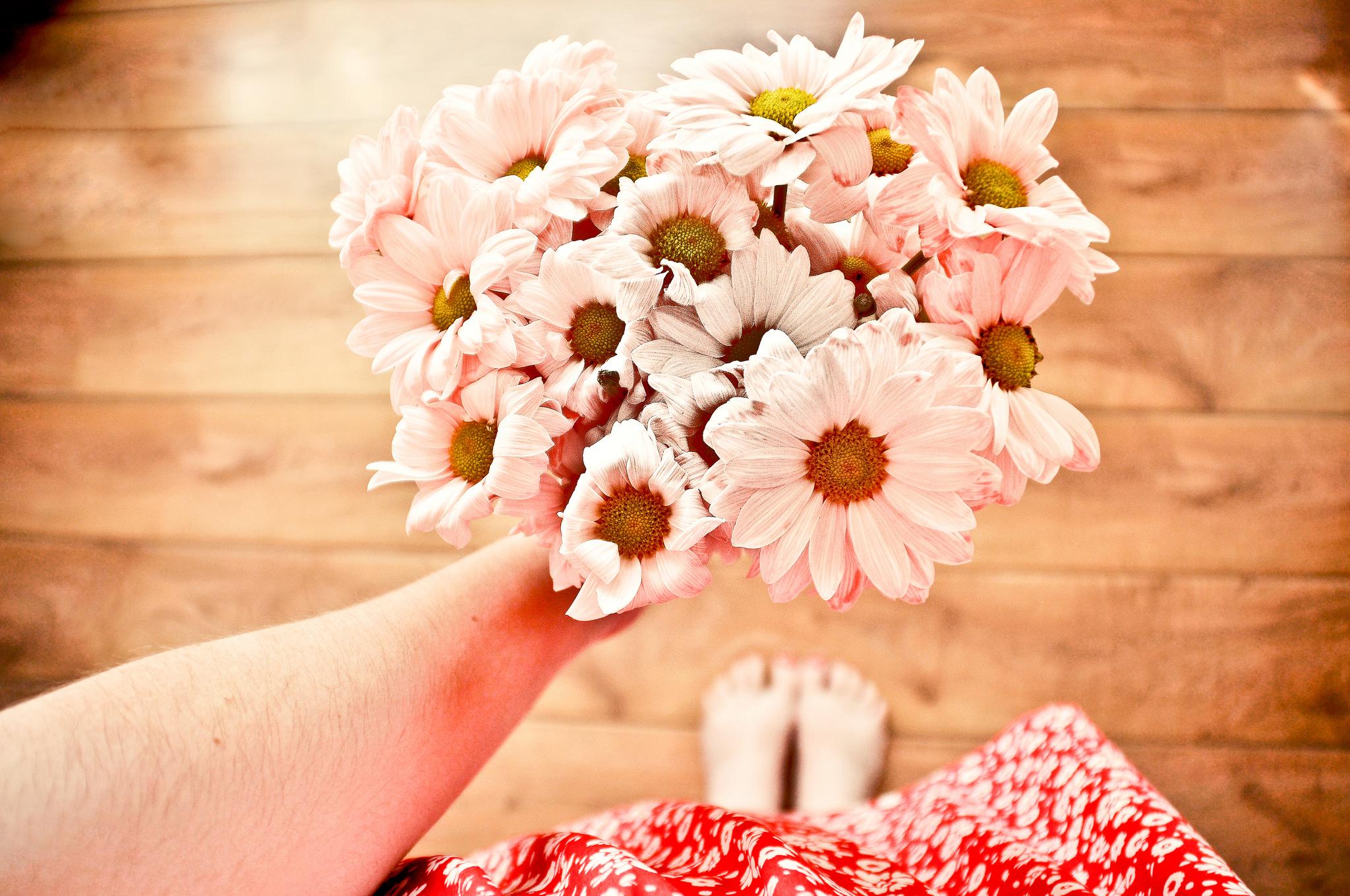 Hermosas flores rosadas - 2048x1360