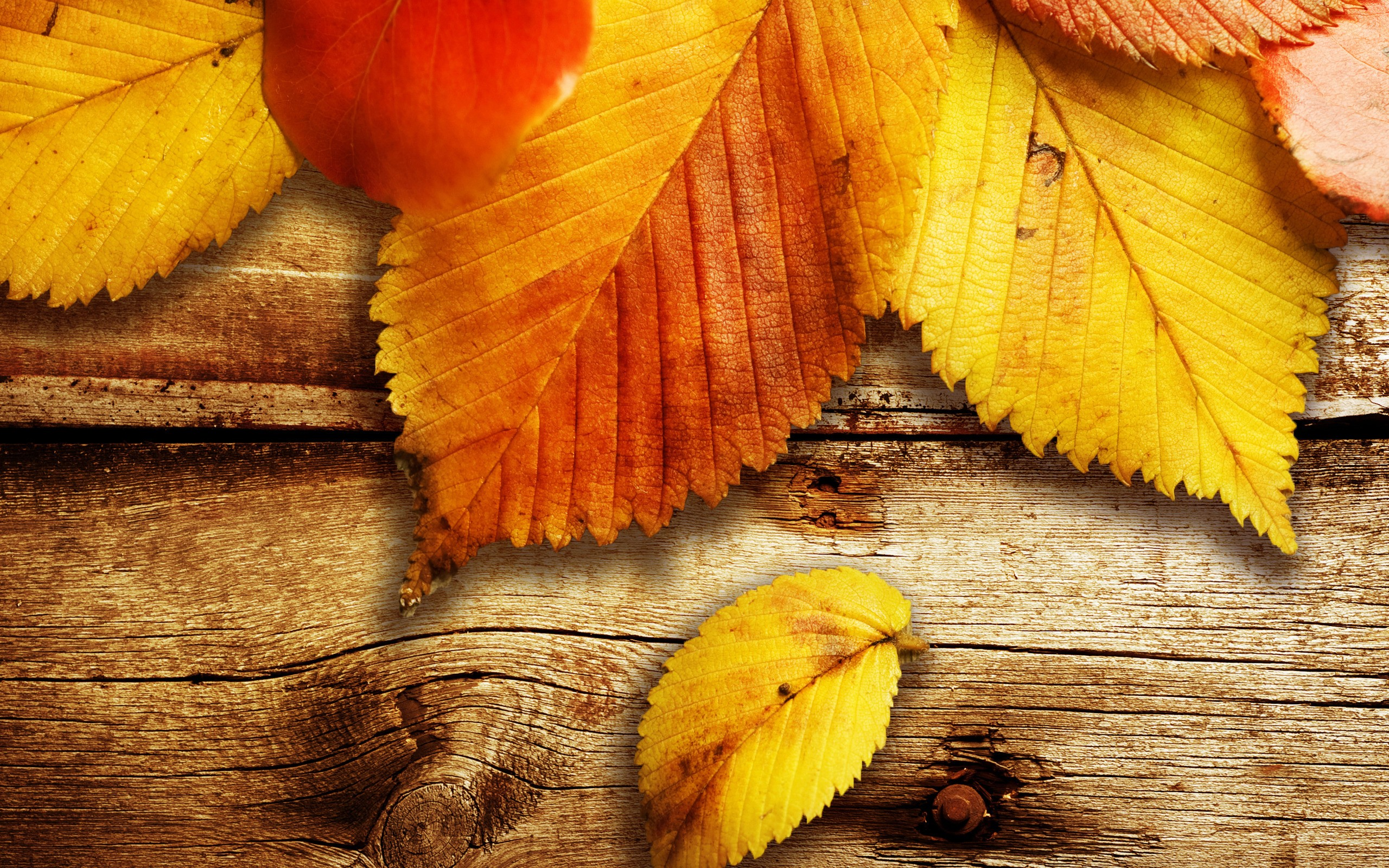 Hojas caidas de otoño - 2560x1600