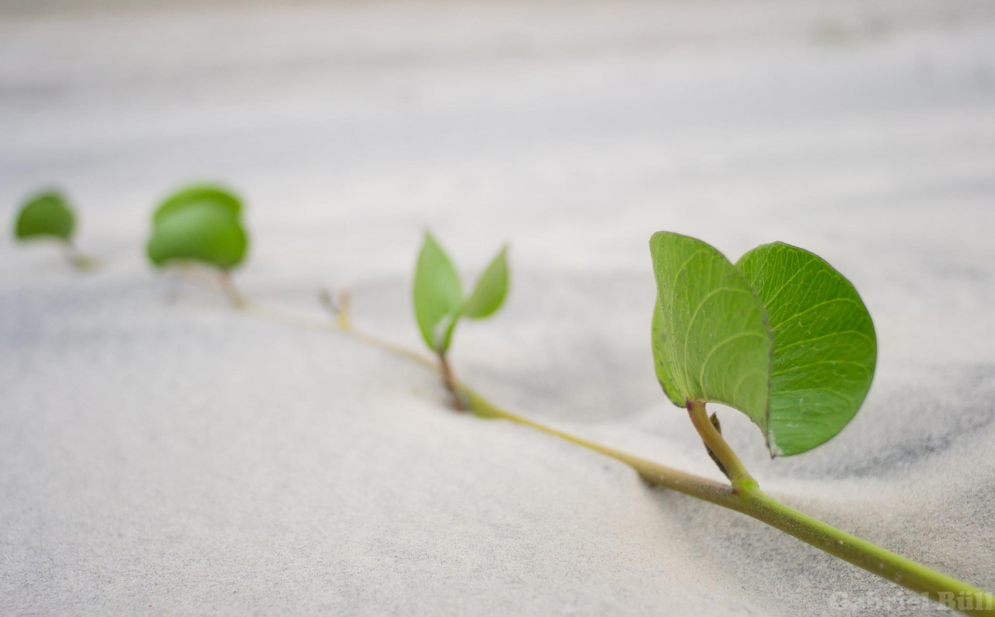 Hojas de plantas en la arena - 2048x1271