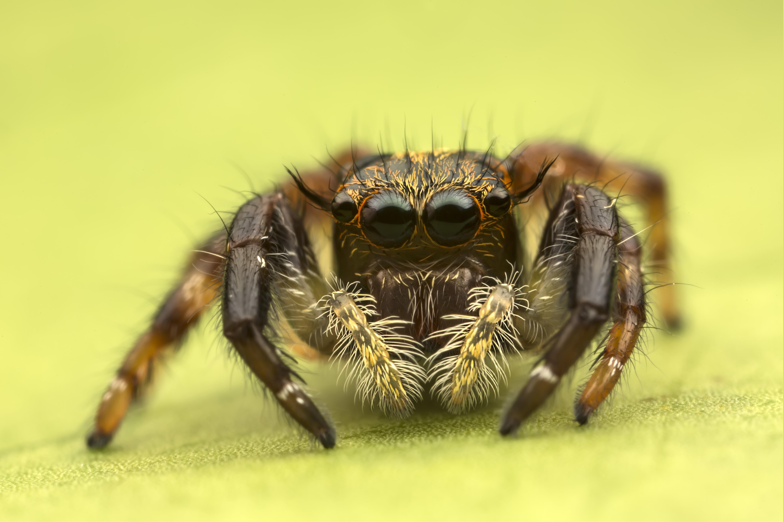 Insecto en macro - 5760x3840