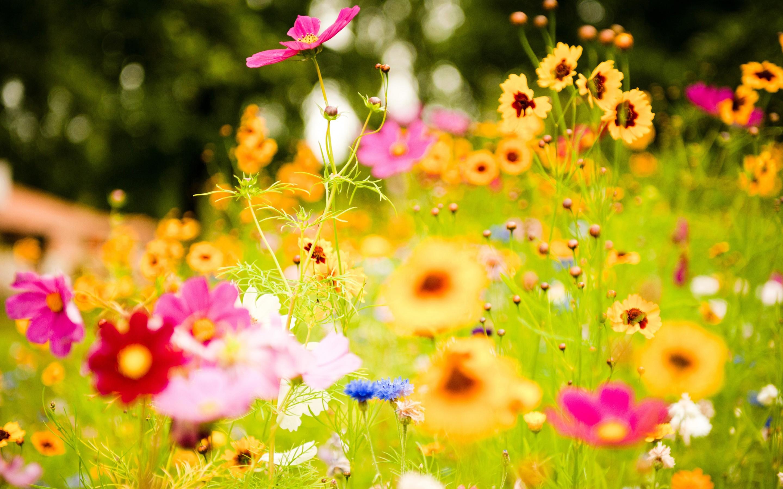 Jardin con flores - 2880x1800