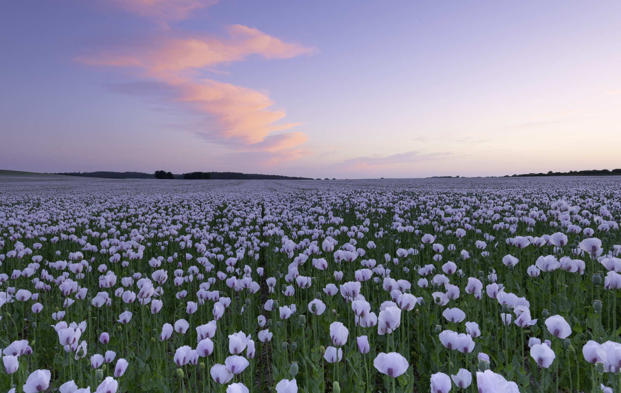 Jardin con flores blancas - 2048x1298
