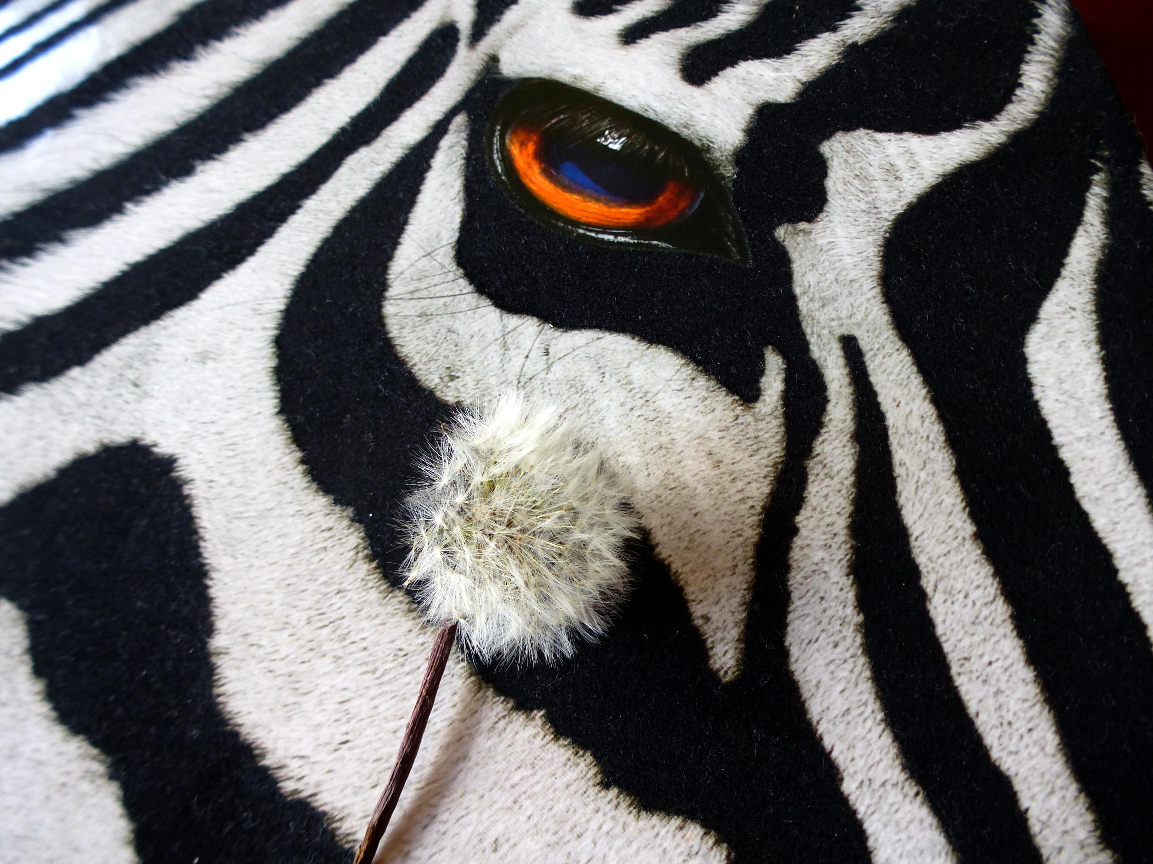 Los ojos de una cebra - 4000x3000