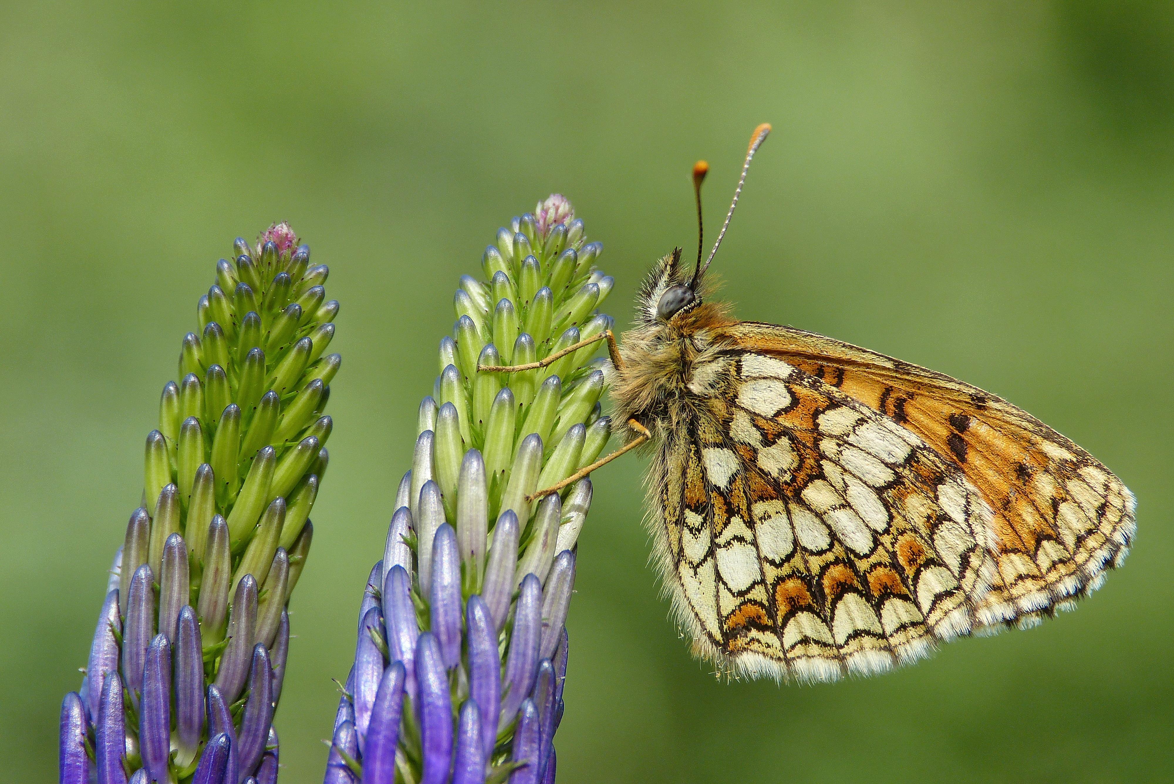Mariposa en macro - 4000x2672