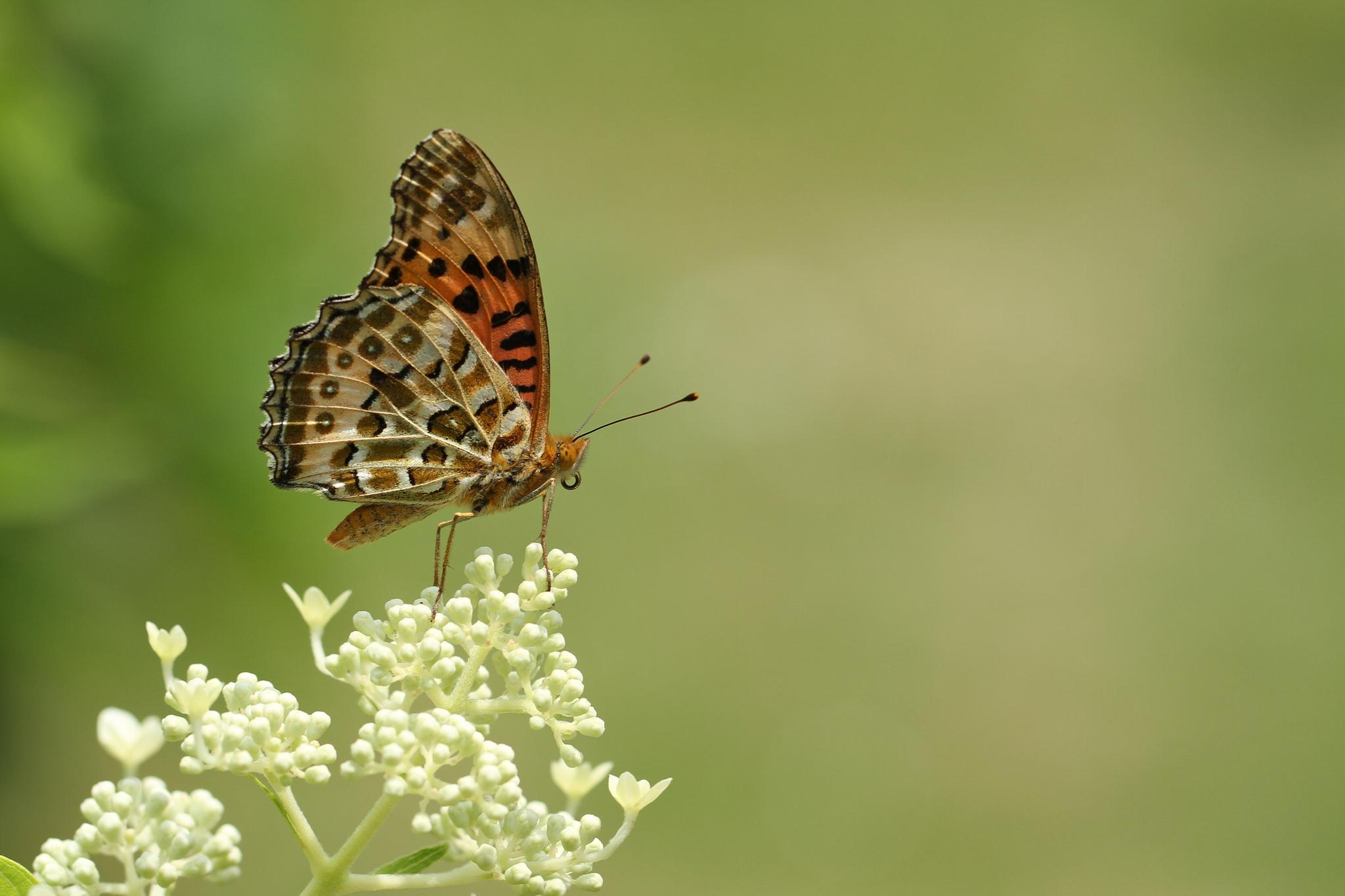 Mariposa marron - 2048x1365