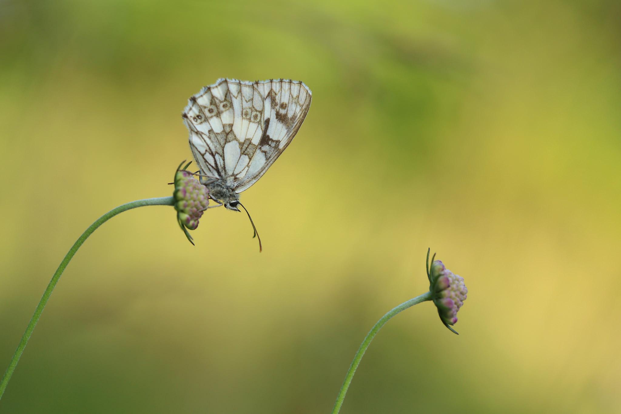 Mariposas en flores macro - 2048x1365