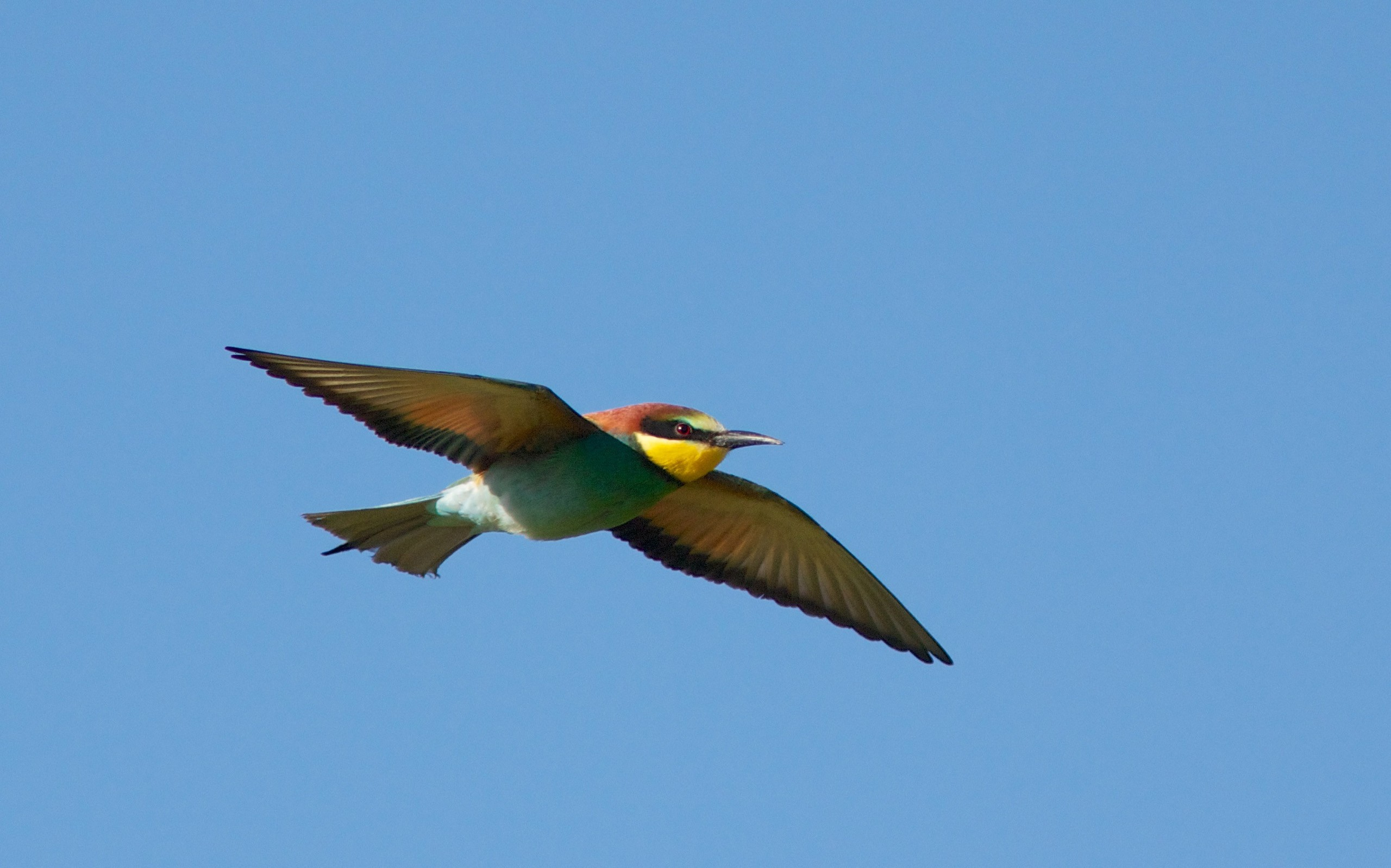 Pájaro de colores - 2560x1598