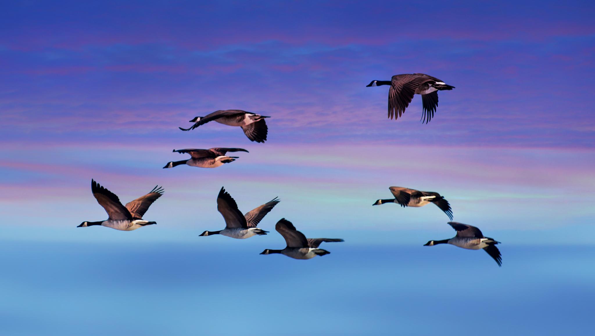 Patos volando - 2048x1158