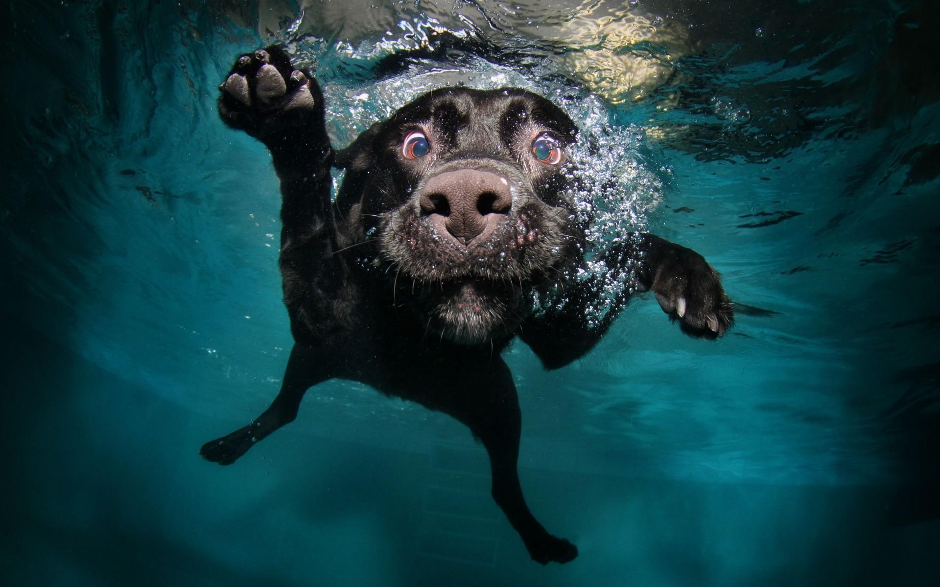 Perro en el agua - 1920x1200