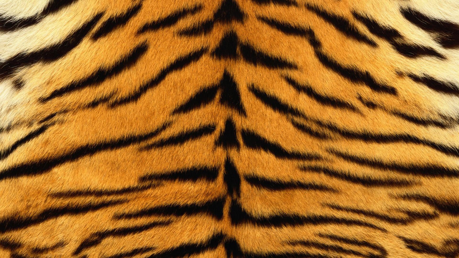 Piel de tigre - 1920x1080