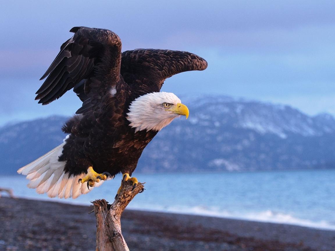 Aguila negra - 1152x864