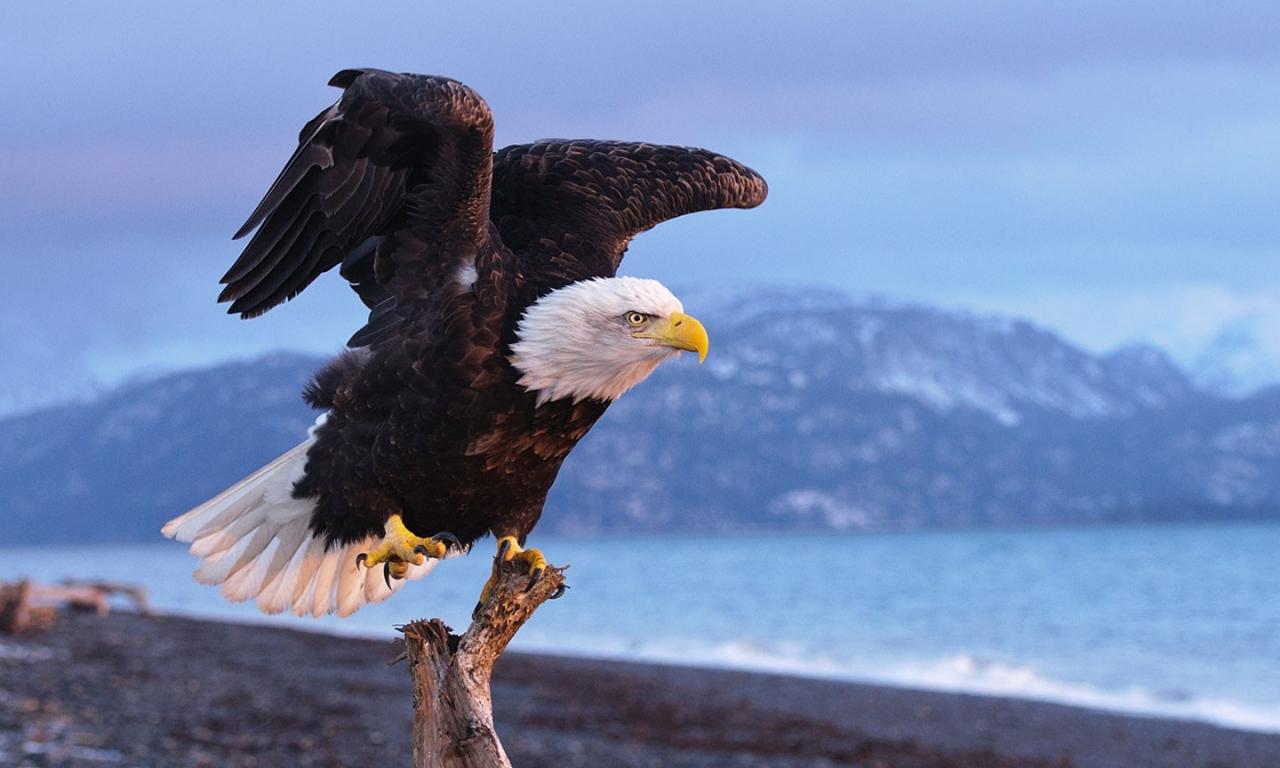 Aguila negra - 1280x768