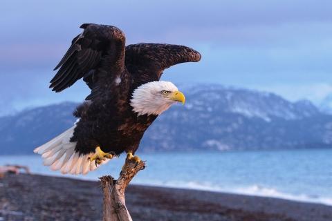 Aguila negra - 480x320