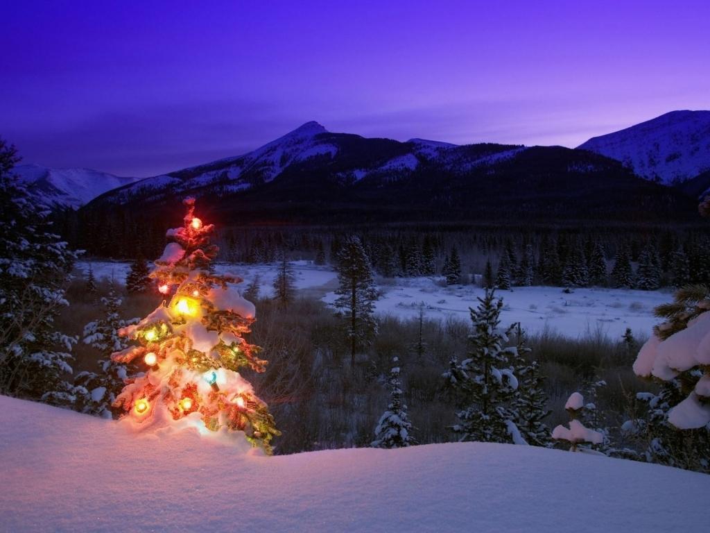 Amanecer con árbol de navidad - 1024x768