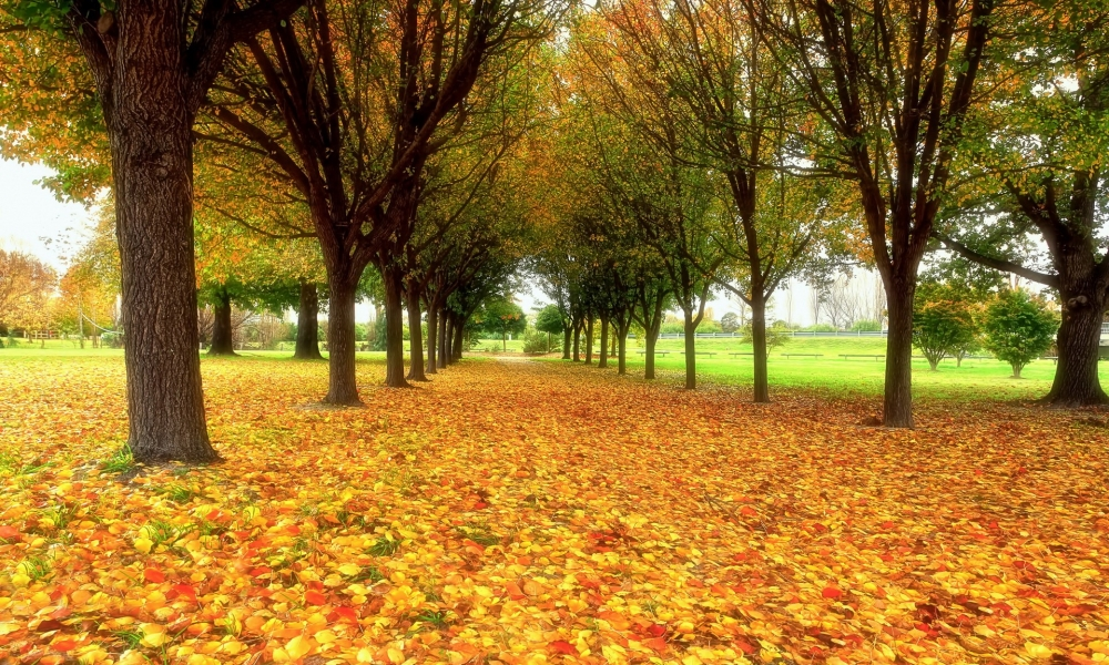 Arboles en otoño - 1000x600