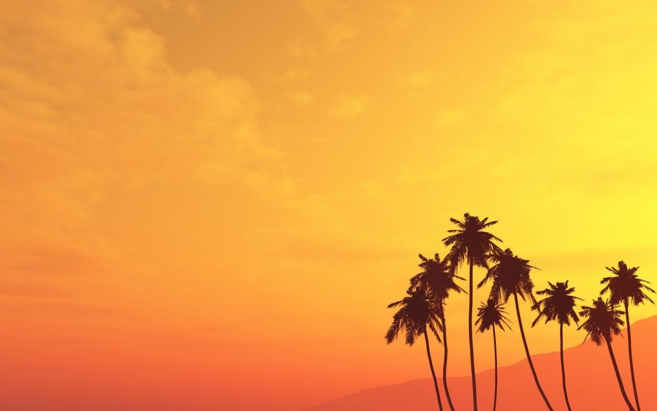 Atardecer con palmeras - 1280x800