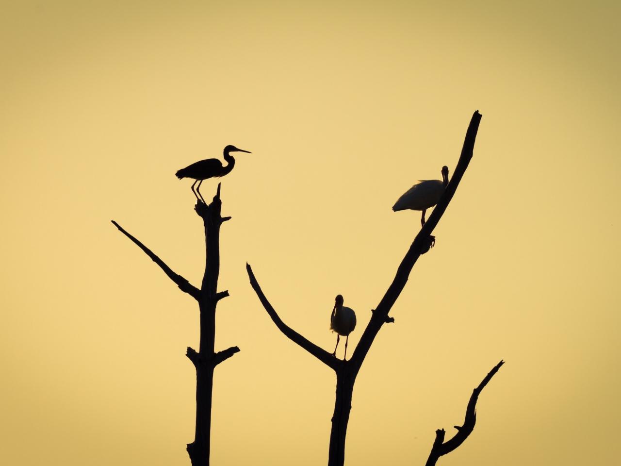 Aves en árboles - 1280x960