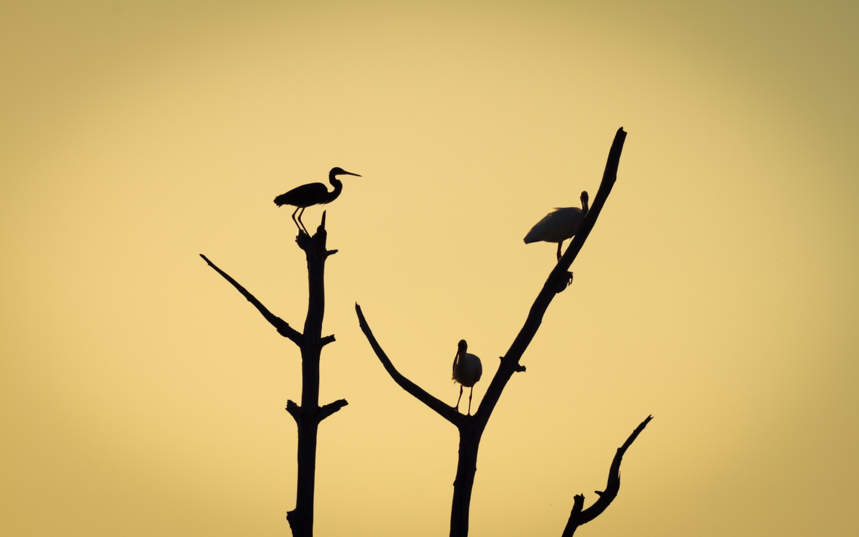 Aves en árboles - 1440x900