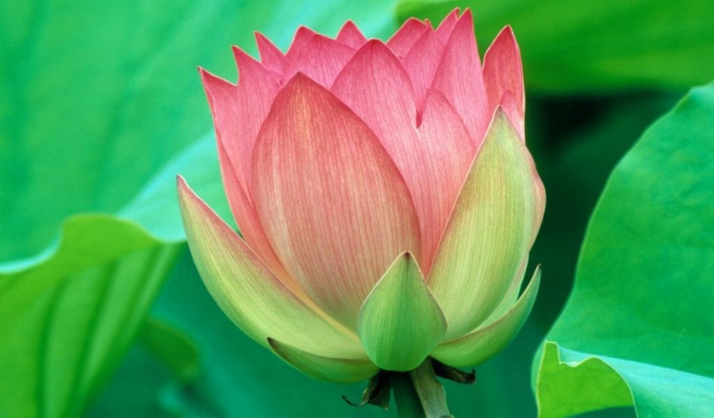 Bella flor - 1024x600
