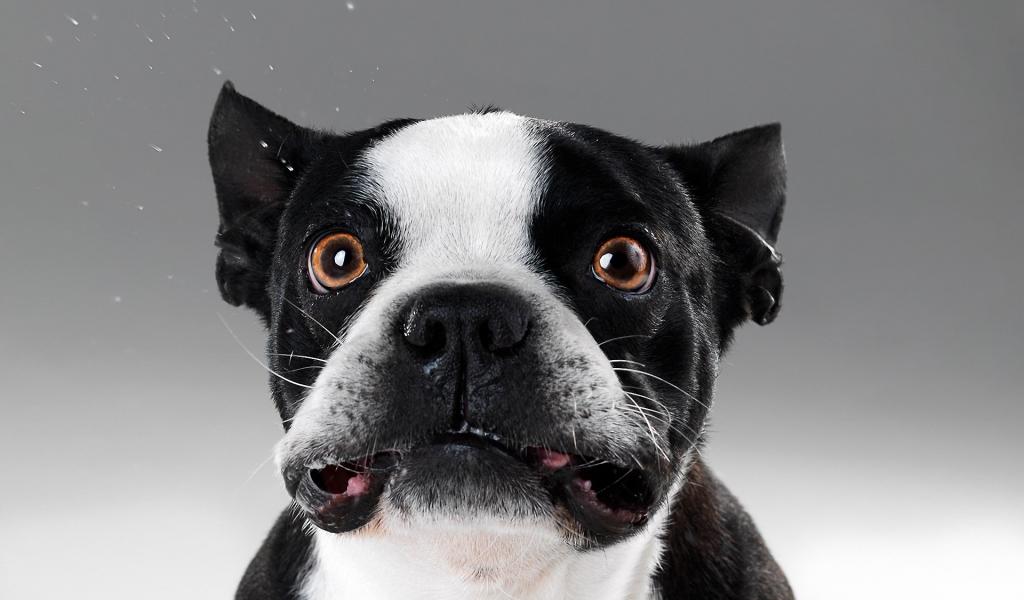 Caras de perros - 1024x600