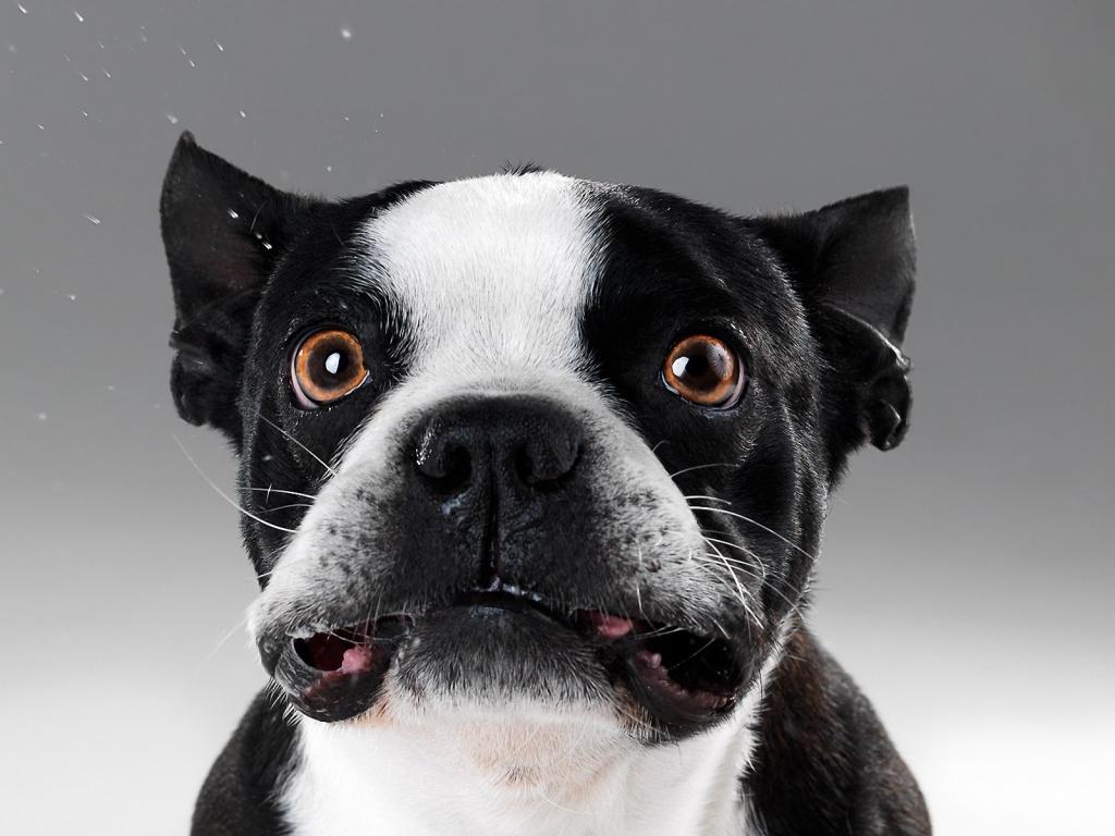 Caras de perros - 1024x768