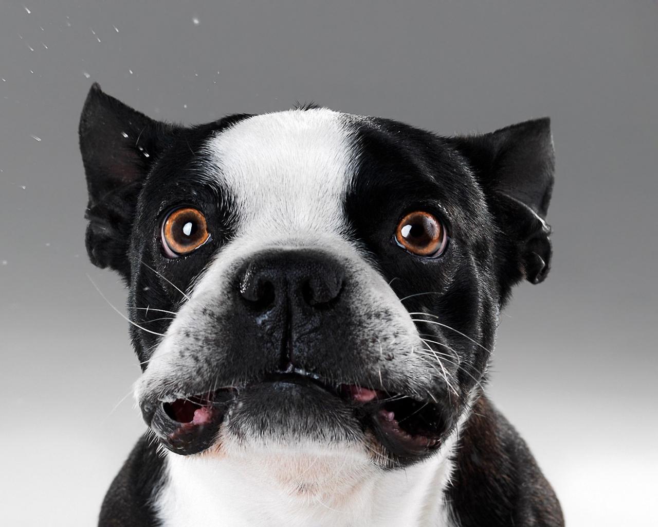 Caras de perros - 1280x1024