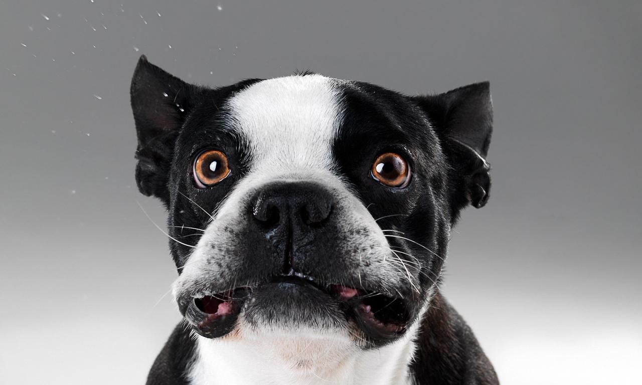 Caras de perros - 1280x768