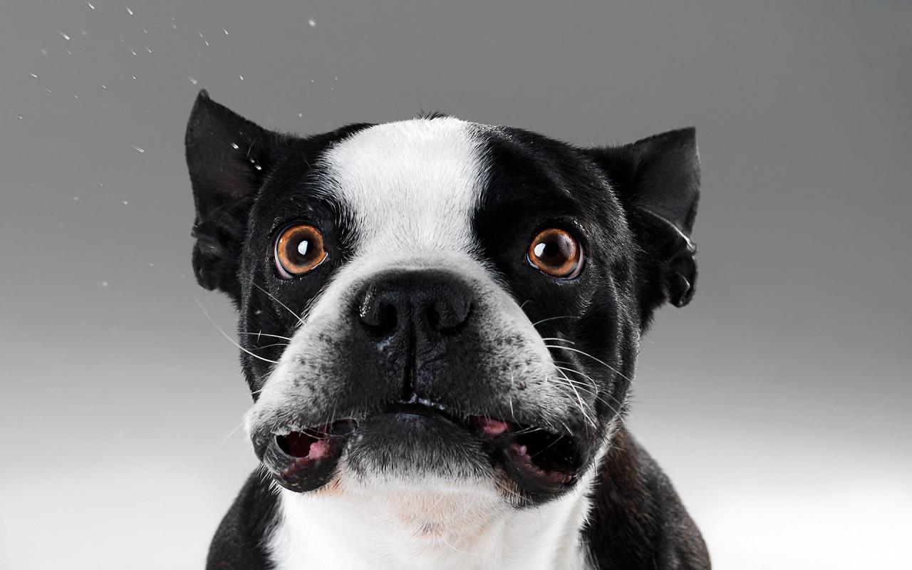 Caras de perros - 1280x800