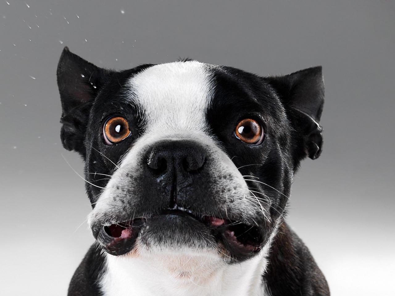 Caras de perros - 1280x960