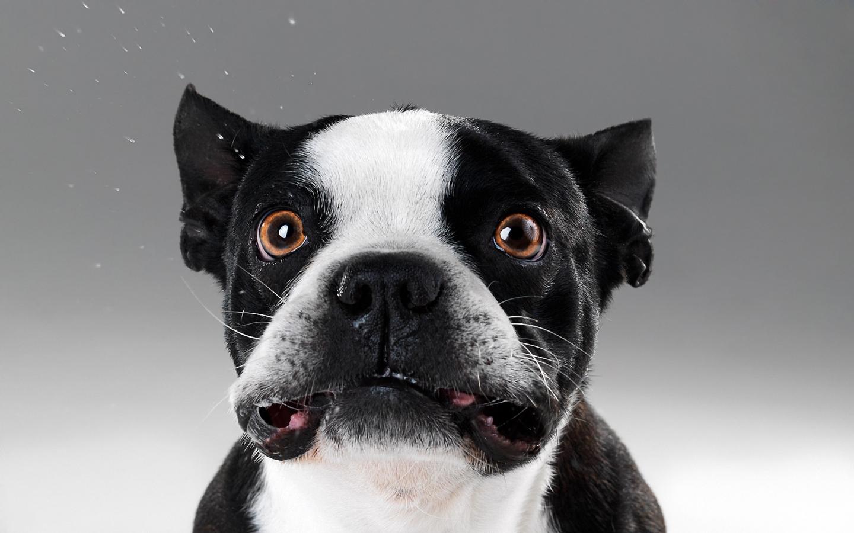 Caras de perros - 1440x900
