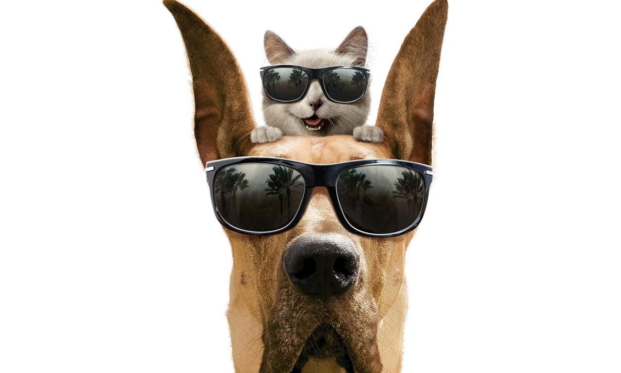 Como perros y gatos - 1280x768