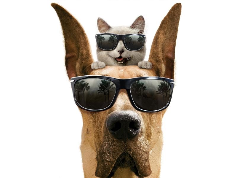 Como perros y gatos - 800x600