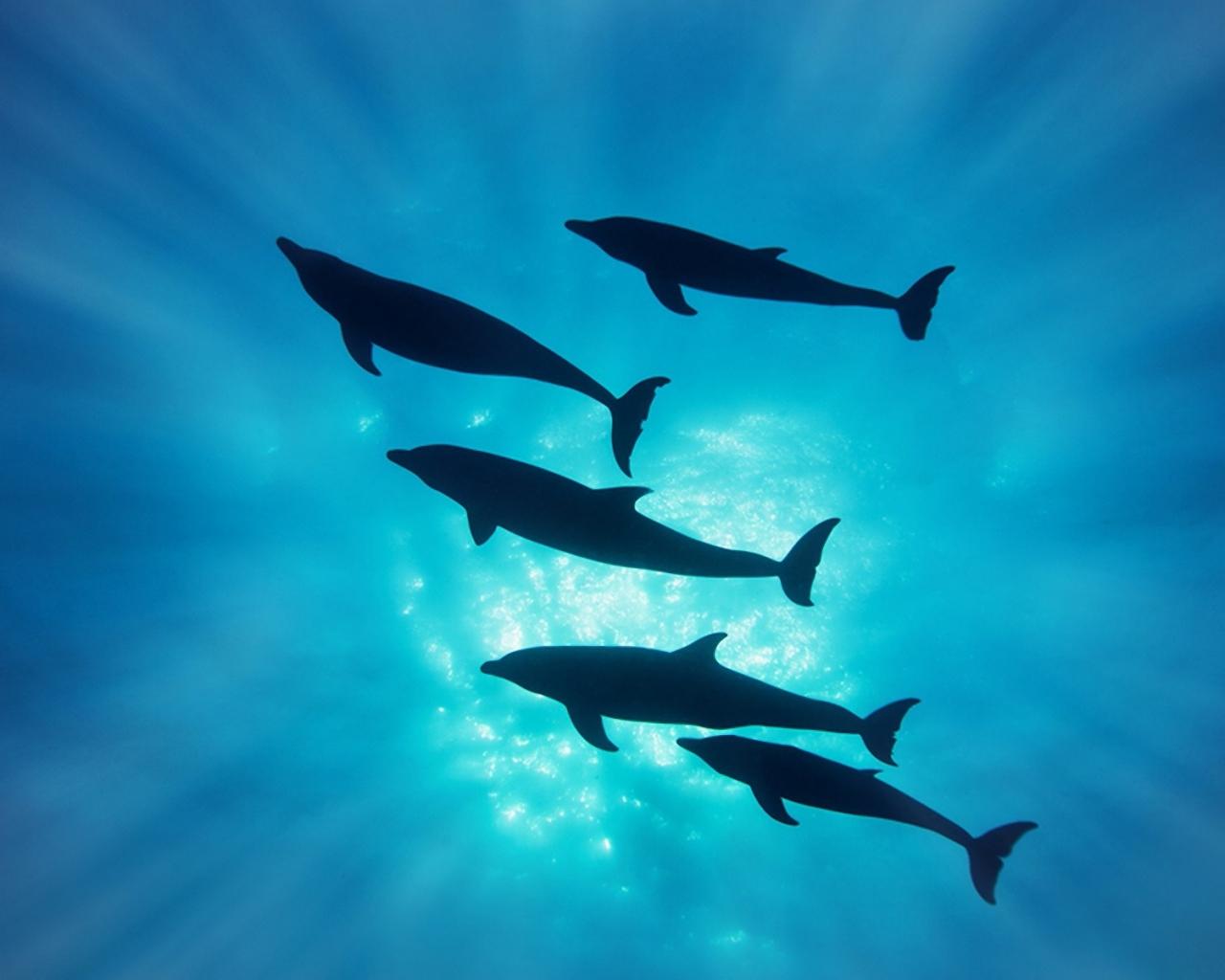 Delfines en el mar - 1280x1024