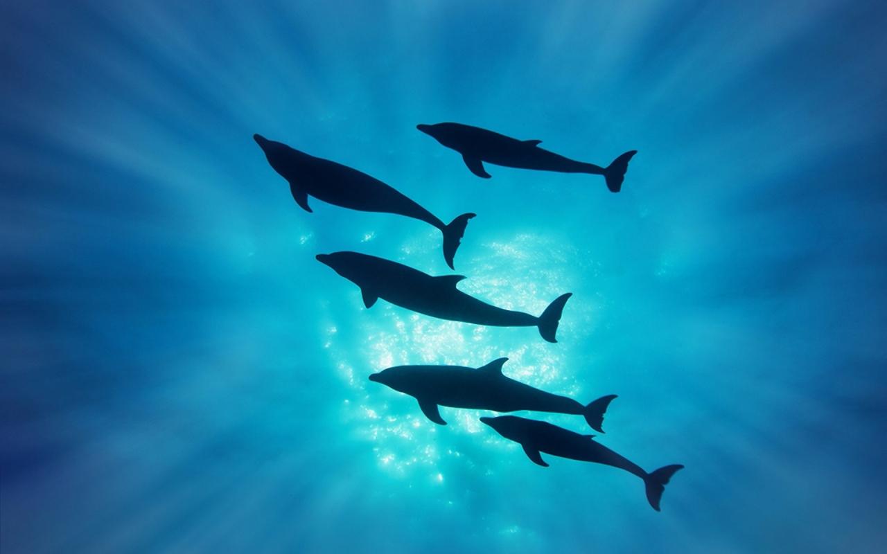 Delfines en el mar - 1280x800